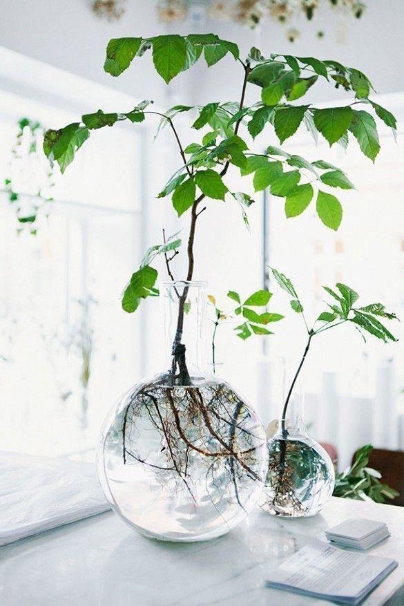 940213-houseplants-03