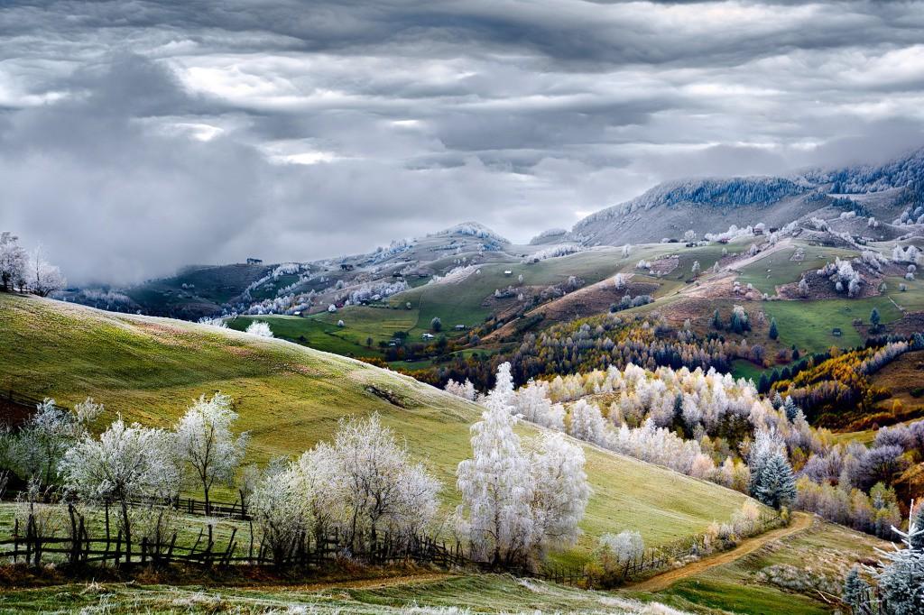 جنگل سفید روستای pestra در رومانی